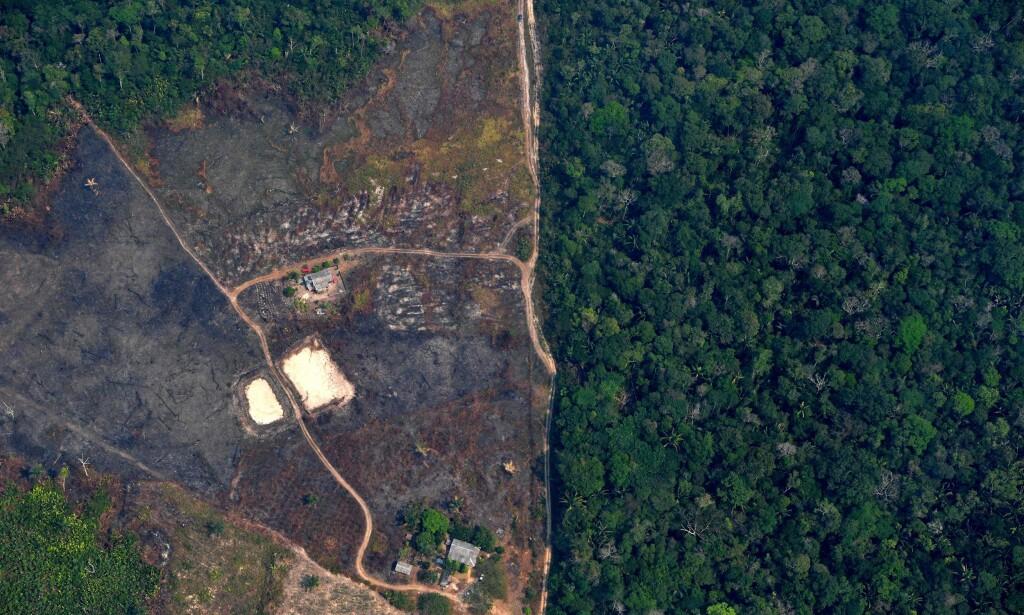 AVSKOGING: Hittil i år har mengden avskoging vært mye større enn tidligere. Foto: Carl De Souza /AFP