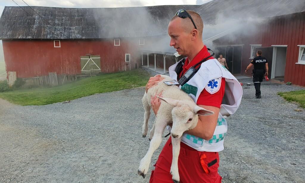 LÅVE: Ambulansearbeider Even Nordli redder et lam fra brannstedet. Foto: Politiet.