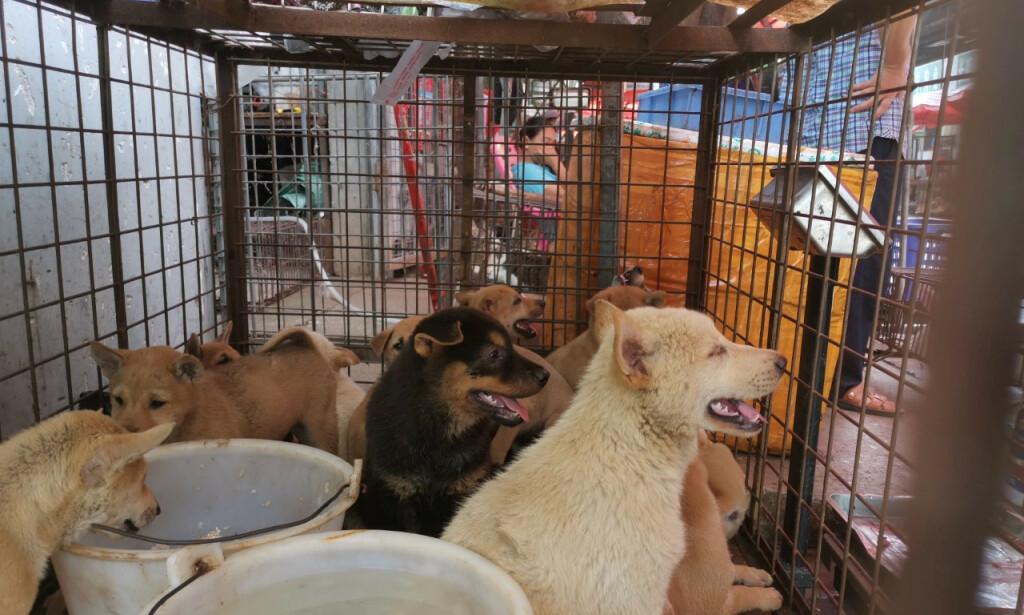 FESTIVAL: Flere tusen hunder spises hvert år under Yulin hundefestival. Foto: Haifent Xu / NTB scanpix