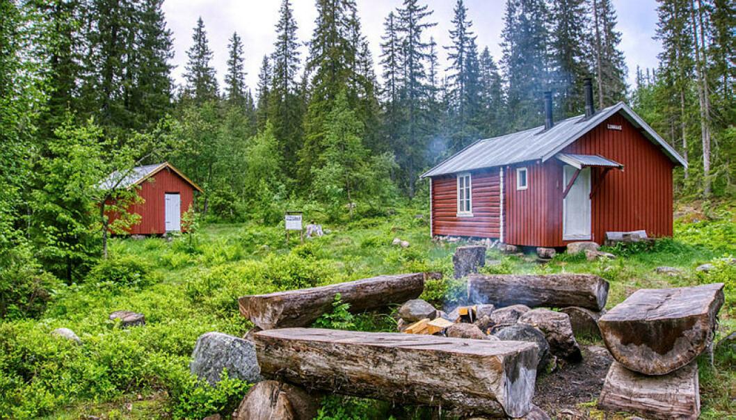Lunnaashytta ligger i vernet området i Modum og byr på skikkelig villmarksstemning. Dette er ei åpen koie som kan brukes gratis og uten forhåndsbestilling. Foto: Erik Brenden/Statskog