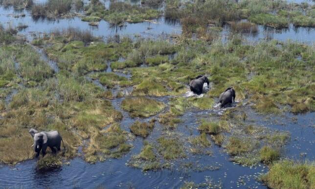 DELTA: Okavango-deltaet er er verdens største innenlandsdelta og er kjent for sitt rike dyreliv. Foto: AFP/ NTB Scanpix