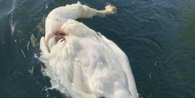 image: «Svanhild» funnet død med stygge skader