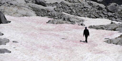 image: Rosa snø i Alpene