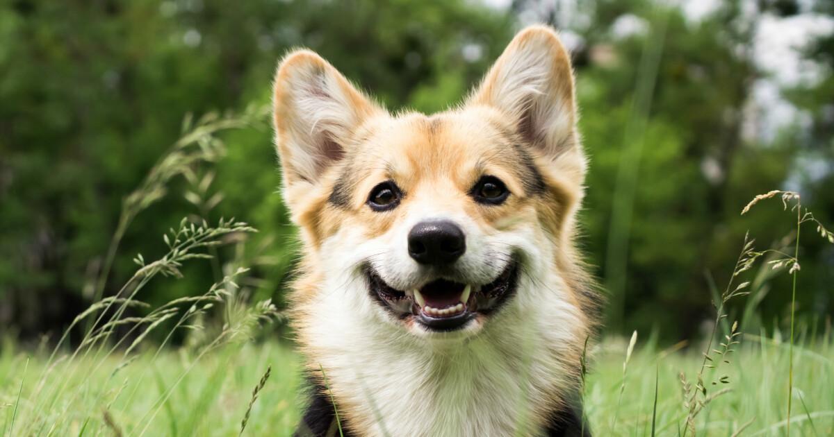 Dette er Norges mest populære hundenavn