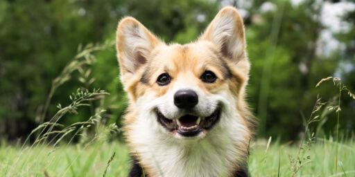 image: Dette er Norges mest populære hundenavn