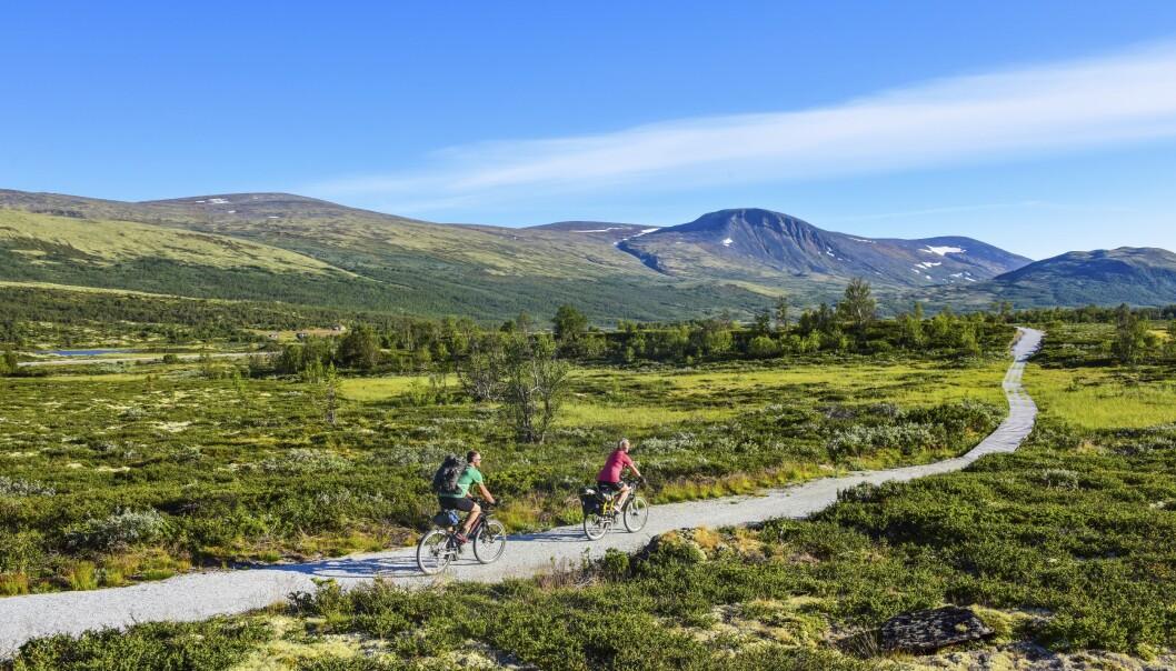 NORGE PÅ SITT FLOTTESTE: På Dovrefjell er det flotte sykkelruter rett gjennom nasjonalparken. FOTO: Torild Moland
