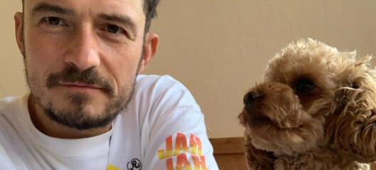 Orlando Bloom i sorg - bekrefter hundens dødsfall etter stor leteaksjon