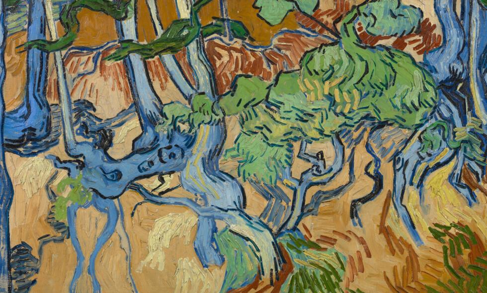 MYSTERIUM: «Trerøtter» var Vincent van Goghs siste maleri. Nå er mysteriet om hvor han malte det, oppklart. Foto: Van Gogh Museum