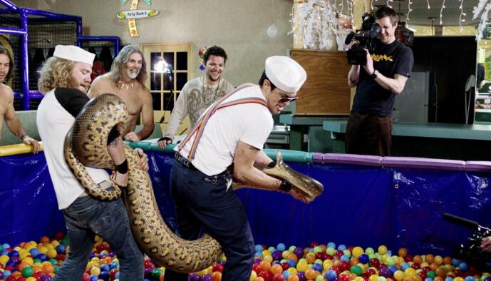 <strong>VILLE:</strong> Gutta fra «Jackass» er kjent for sine elleville stunts. Her med en gigantisk slange. Foto: NTB Scanpix