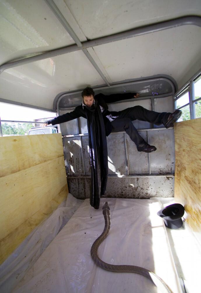 <strong>SLANGE:</strong> Gutta i «Jackass» har ikke vært fremmed for å leke seg med farlige dyr. Her er Bam Margera låst inn i en henger sammen med en slange. Foto: NTB Scanpix