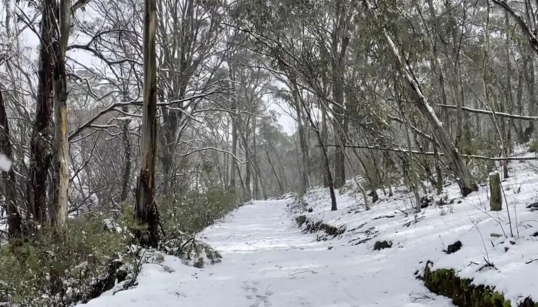 SKILØYPE? Det er nesten så man kunne tatt fram skiene og gått seg en liten langrennstur på denne stien i Oberon, New South Wales, Australia. Foto: Tracey Johns / Reuters / Scanpix