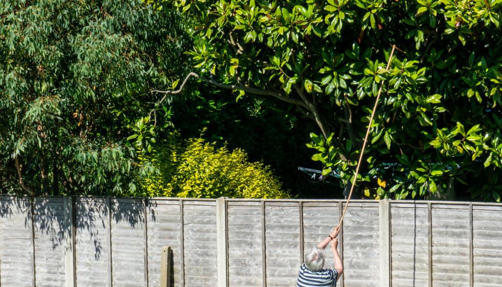 <strong>FELTE TRÆR:</strong> Da naboen døde så en 67 år gammel mann sitt snitt til å fjerne noen trær på nabotomta. Men det gikk ikke upåaktet hen. Illustrasjonsfoto: Scanpix
