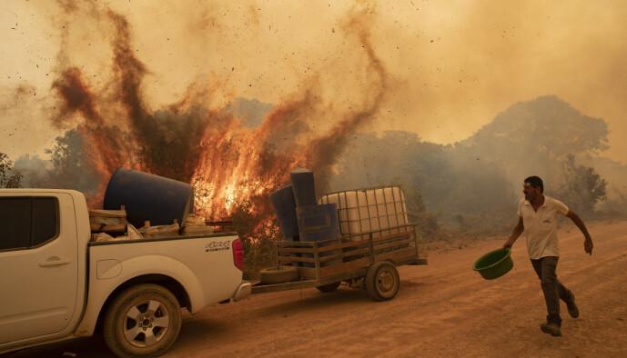 I lokalbefolkningen i Pantanal er mange avhengige av økoturisme, som rammes hardt både av koronapandemien og brannene. Her forsøker en frivillig å slukke en brann ved Transpantaneira-veien i nærheten av Pocone fredag. Foto: Andre Penner / AP / NTB scanpix