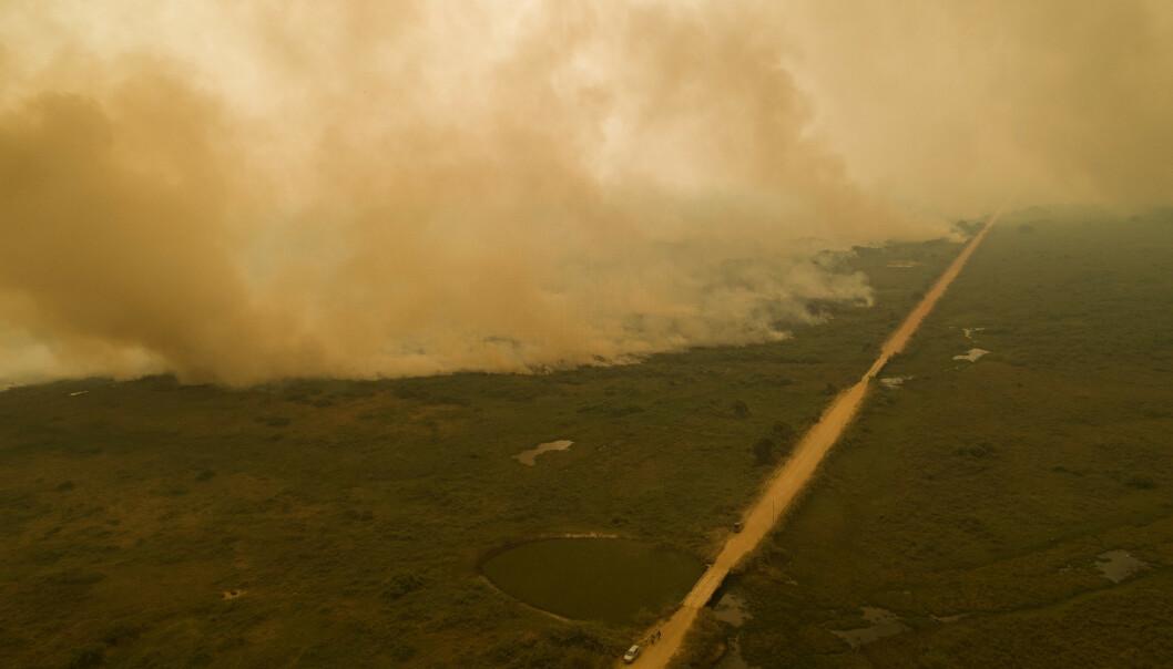 Tørken som har rammet Pantanal i år, står i fare for å bli den nye normalen, ifølge Tasso Azevedo, koordinator i Mapbiomas, en forskningsgruppe som overvåker miljødata. Foto: Andre Penner / AP / NTB scanpix
