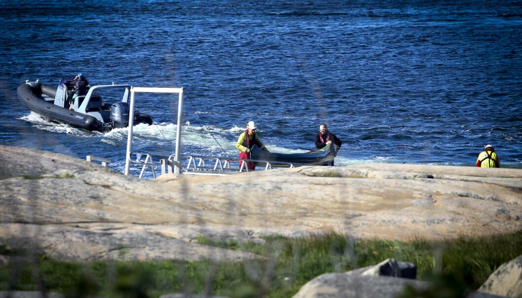 <strong>KANTRET:</strong> Flere kanoer kantret utenfor Fredrikstad. Hovedredningssentralen anslår at 16 personer havnet i vannet. Foto: Nyhetstips.no