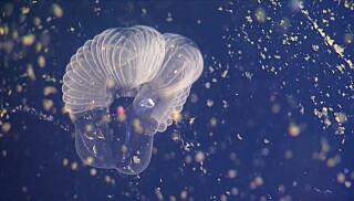 Image: Mystisk sjøskapning gir gjennombrudd