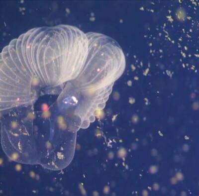 Image: Mystisk sjøskapning overrasker