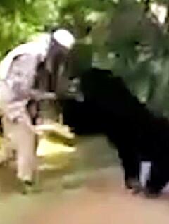 Image: Plutselig angriper bjørnen