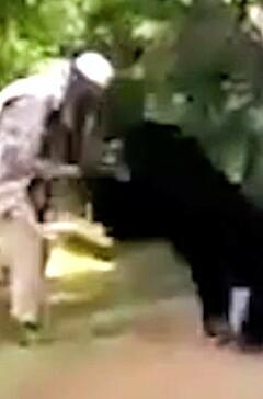 Image: Erter bjørnen - går til angrep