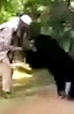 Image: Bjørnen går til angrep