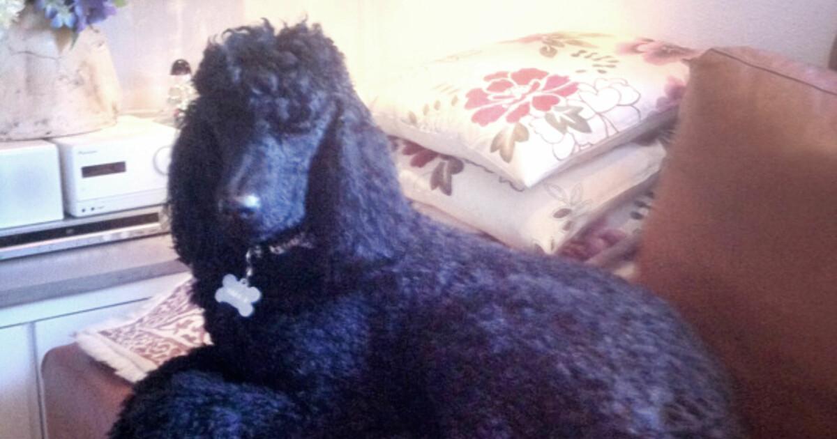 har hunden din en sykdom se om du kan klage dinside. Black Bedroom Furniture Sets. Home Design Ideas