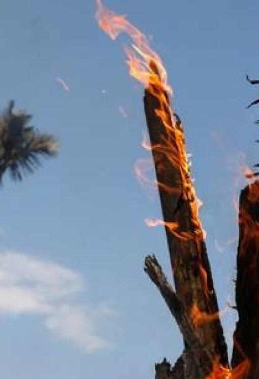 9500 skogbranner i Amazonas - bare den siste uken