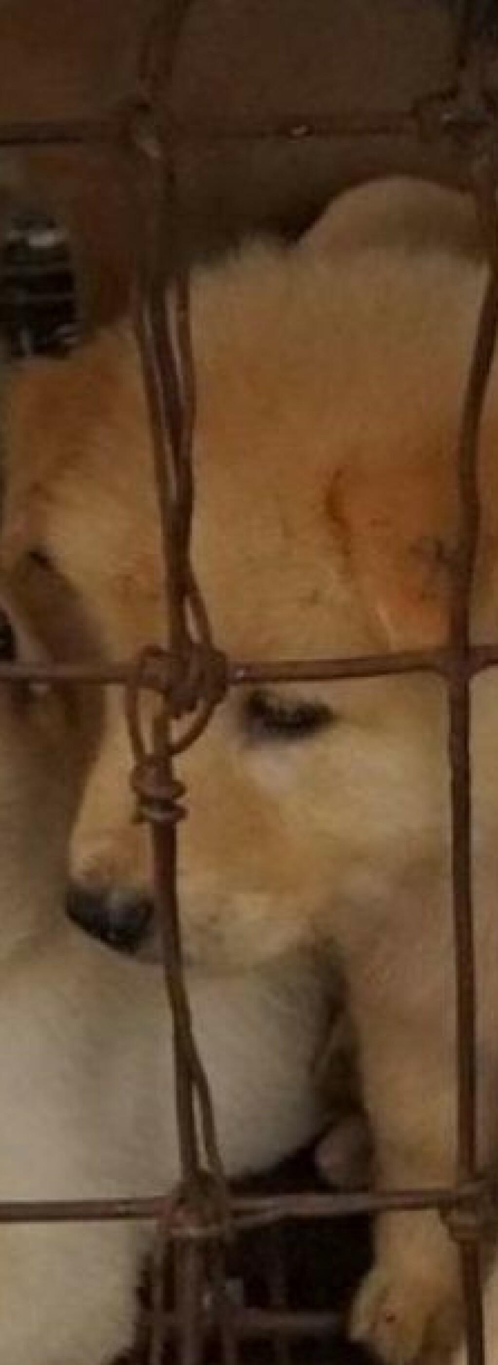 Kina har offentliggjort ny liste om dyr som kan spises