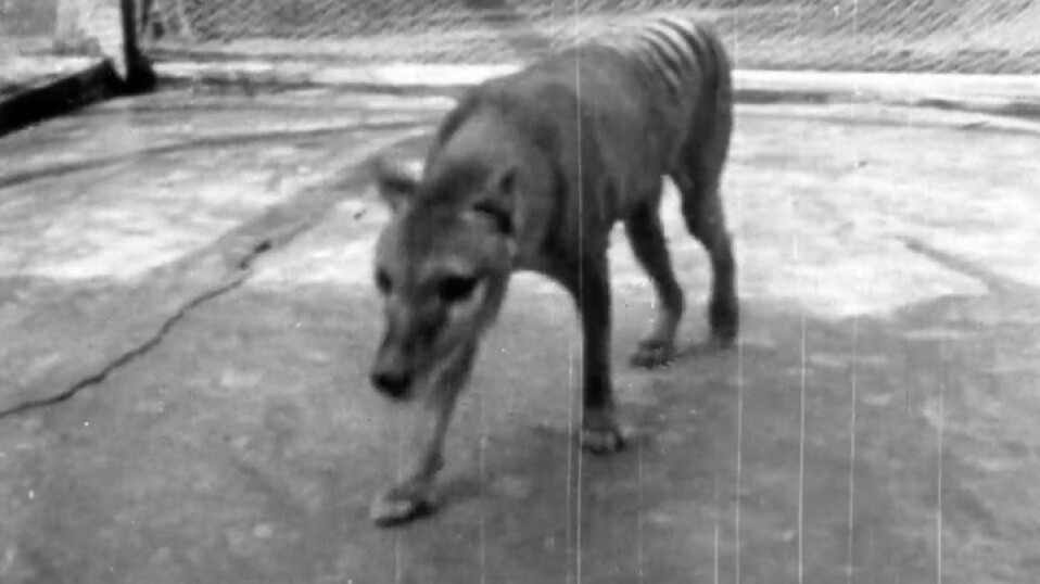 Nye bilder av utdødd dyr