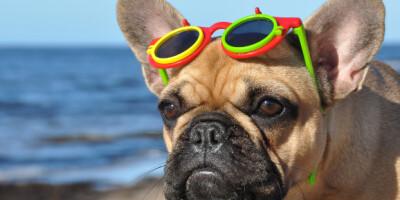 Image: Her bør også hunden bruke solbriller i sommer
