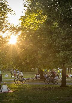 Image: Grünerløkka-parkens hemmelighet: Døde overalt