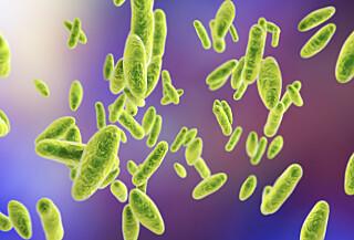 Image: Tusenvis smittet av bakteriesykdom