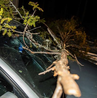 Image: Advarer: Trær kan knekke