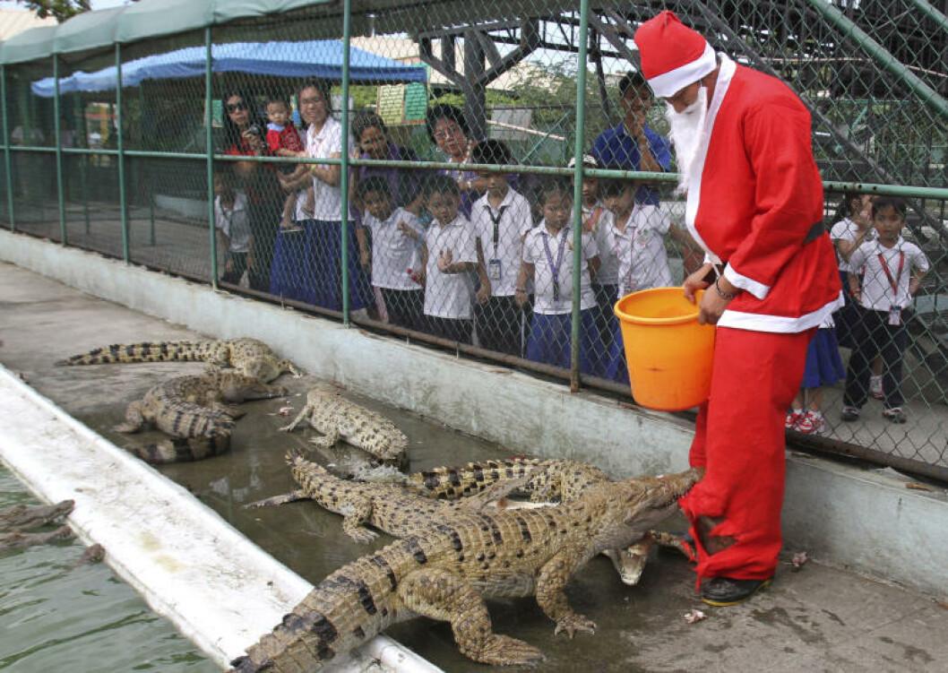 <strong>SNILL MOT DYRA:</strong> Julenissen i Manila er ikke bare snill mot barna, den passer også på at krokodillene får mat til jul. Foto: ROMEO RANOCO/REUTERS