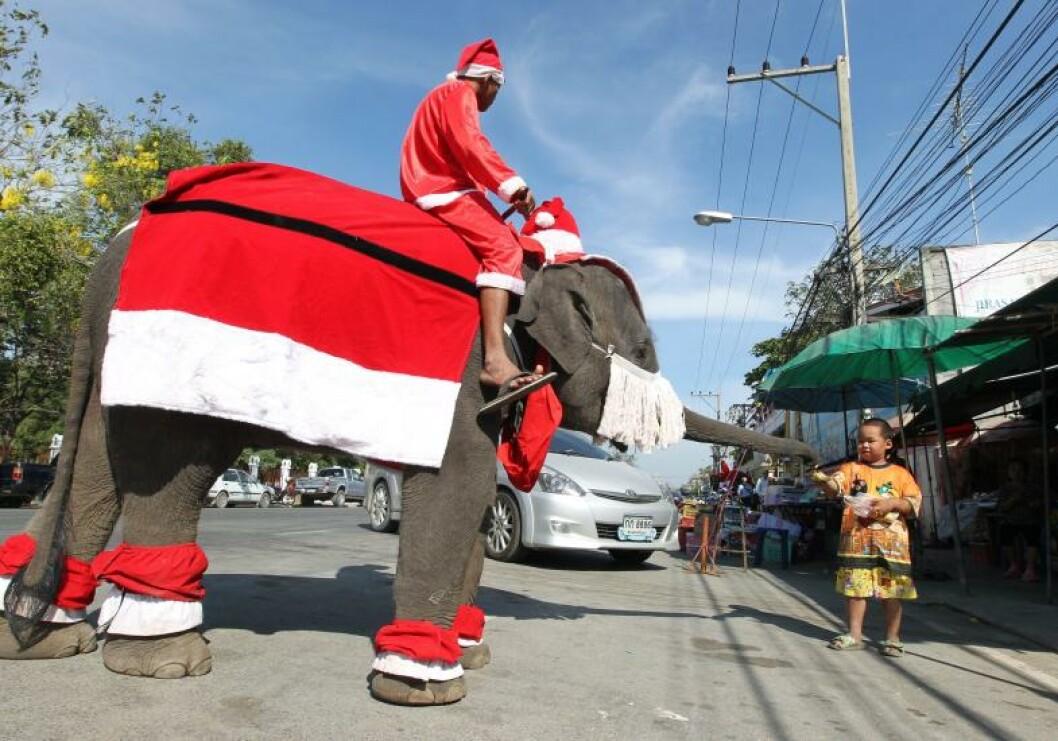 <strong>ELEFANTNISSE:</strong> Det er vel kanskje verdens største julenisse. Elefanten, altså. Den viste seg fram i Bangkok tidligere i dag. Foto: NARONG SANGNAK/EPA