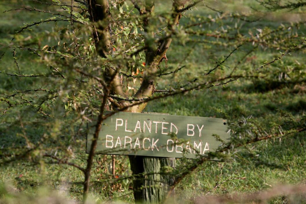 <strong>OBAMA-TRE:</strong> Barack Obama plantet et eget tre da han besøkte Masai Mara i 2006.