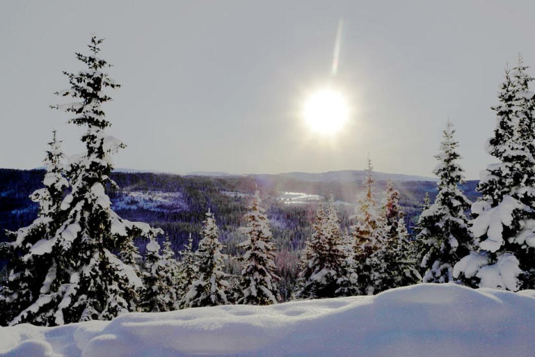 <strong>KVITFJELL:</strong> På vestsida skinner sola inn mot den blå timen og viser at her finnes mye mer å glede seg over enn bratte utforløyper. Med «Lillehammer-passet» kan du kjøre i fem alpinanlegg: Skeikampen, Sjusjøen, Hafjell, Gålå og Kvitfjell. Foto: OLE C.H. THOMASSEN