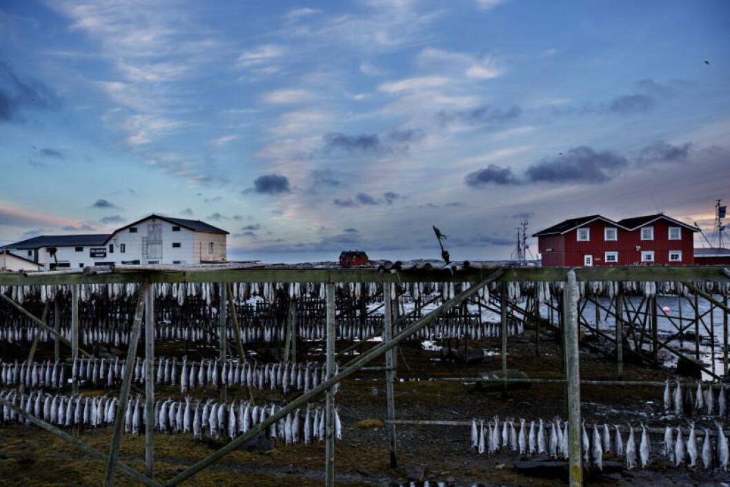 <strong>NATURSKJØNT:</strong> Ytterst i Lofoten, 100 kilometer fra fastlandet, ligger øykommunen Røst. - Under vinterfisket kommer det mange tilreisende, både fiskere og turister. Vi ligger midt i «feskfatet», sier ordfører Tor Arne Andreassen. Foto: ANITA ARNTZEN