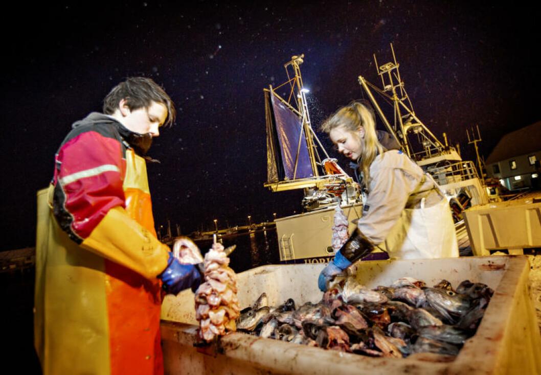 <strong>I ARBEID:</strong> Vegard Vikedal (13) og Martine Johansen (11) tjener egne penger ved å skjære torsketunger på kaia. Foto: ANITA ARNTZEN