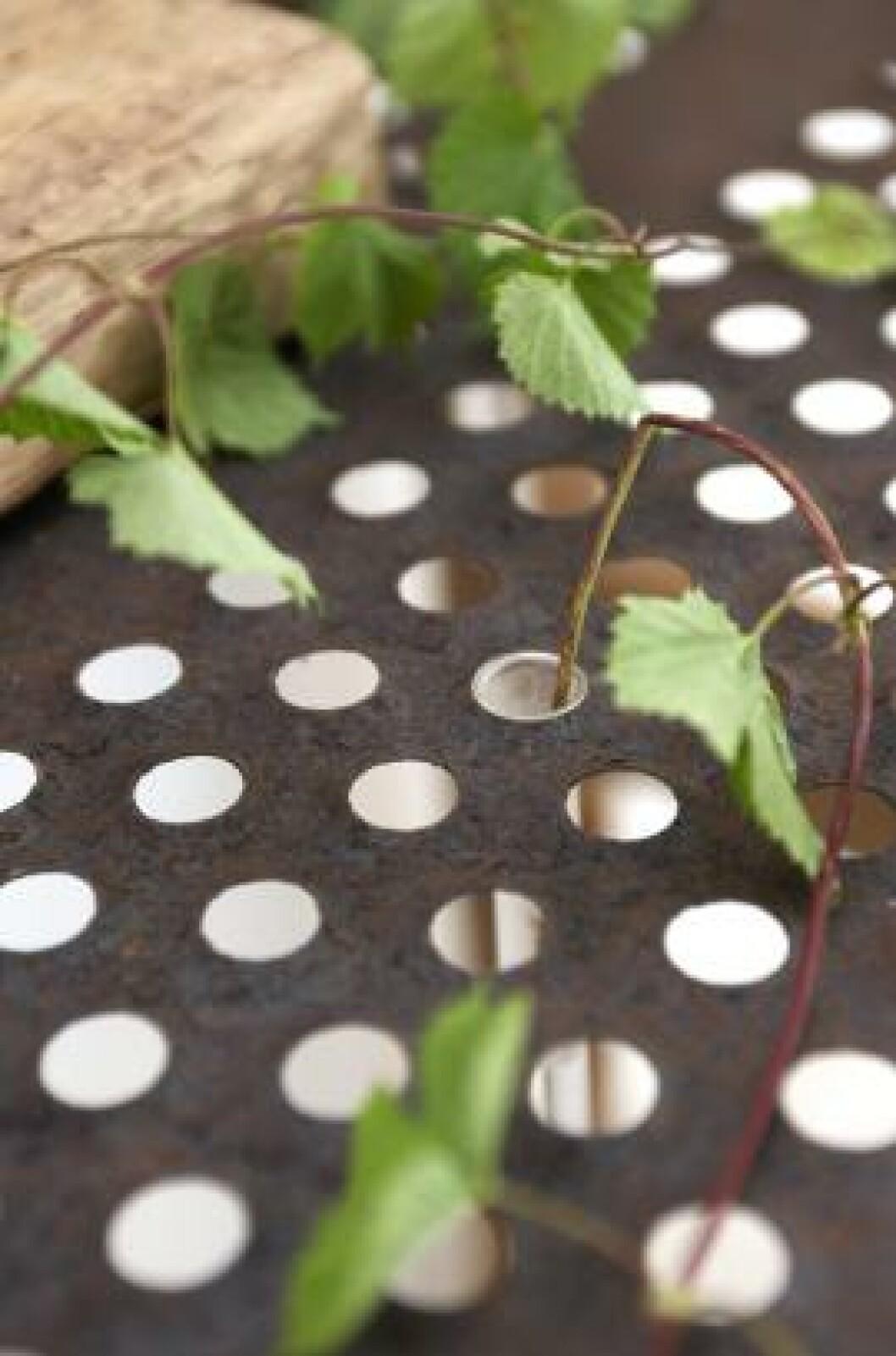 <strong>SMART BORDPLATE:</strong> Sofia har laget en bordplate av en sil som før satt på en skurtresker. I hullene setter hun reagensrør, og vips, har hun små vaser. FOTO: House of pictures