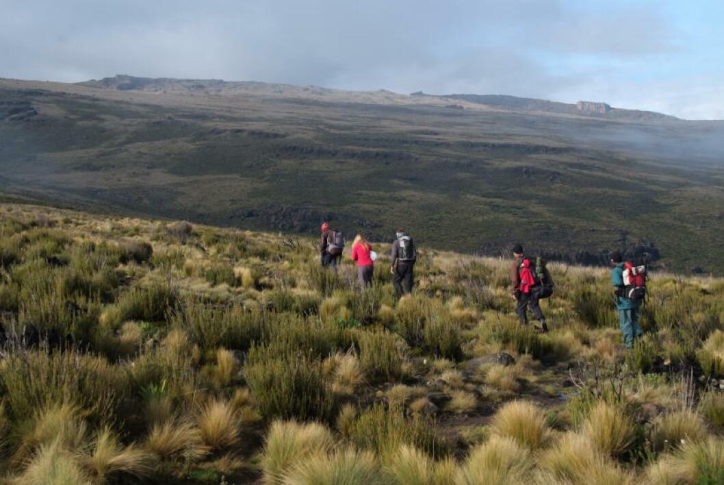 <strong>UNIKE NATUR:</strong> Det er den varierende naturen som gjør ferden opp Mt. Kenya så spesiell. Underveis passerer du fem klimasoner. Foto: TORILD MOLAND
