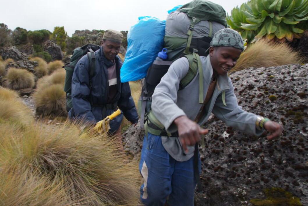 <strong>TØFFERE ENN TOGET:</strong> Bærerne Amos Wahotne og Samuel Githinji på vei ned fra fjellet - og her er «sekkene» deres langt lettere og mindre enn ved start. De gjør en fantastisk jobb og er morsomt reisefølge.Foto: RONNY FRIMANN