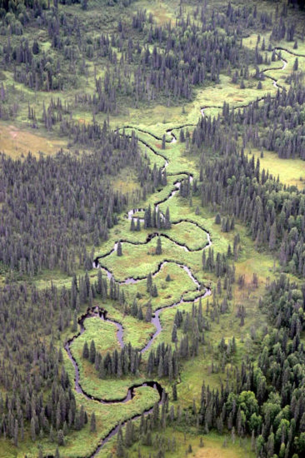 <strong>ØDE:</strong> Alaska er fem ganger større enn hele Norge, men har under 800 000 inbyggere. Det er altså mye natur. Foto: RUNAR LARSEN
