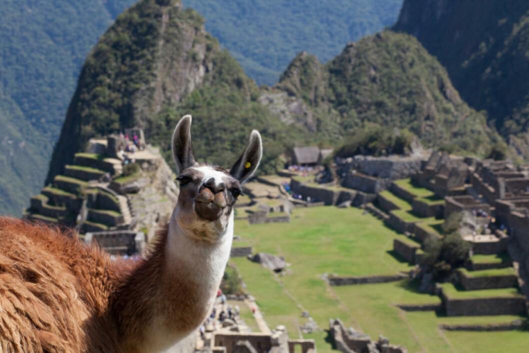 16. CUSCO, PERU Foto: GERAINT ROWLAND / CREATIVE COMMONS